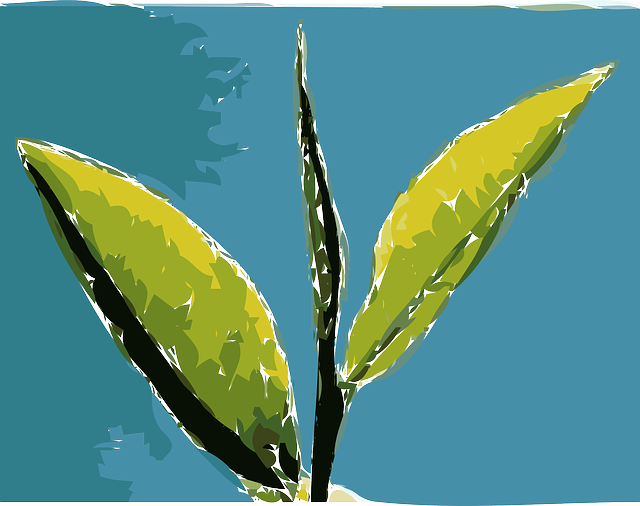 جزر ماركيزاس