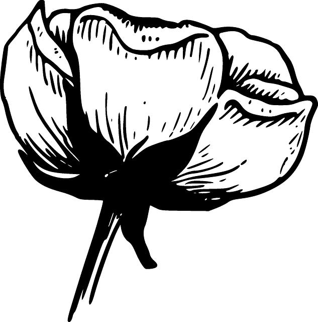 طريقة عمل السمك البوري