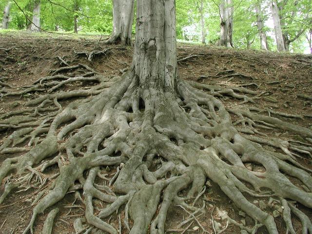 يوم الشجرة