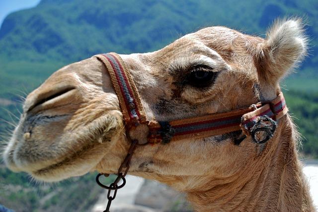 محافظات منطقة مكة المكرمة