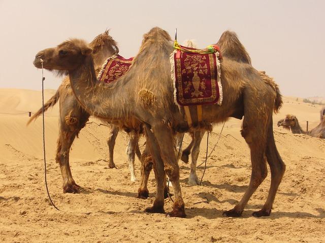 أحمد الذهبي بن إسماعيل